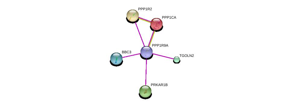 http://string-db.org/version_10/api/image/networkList?limit=0&targetmode=proteins&caller_identity=gene_cards&network_flavor=evidence&identifiers=9606.ENSP00000405514%0d%0a9606.ENSP00000326031%0d%0a9606.ENSP00000404503%0d%0a9606.ENSP00000328178%0d%0a9606.ENSP00000353415%0d%0a9606.ENSP00000386443%0d%0a