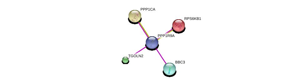 http://string-db.org/version_10/api/image/networkList?limit=0&targetmode=proteins&caller_identity=gene_cards&network_flavor=evidence&identifiers=9606.ENSP00000405514%0d%0a9606.ENSP00000326031%0d%0a9606.ENSP00000404503%0d%0a9606.ENSP00000404503%0d%0a9606.ENSP00000386443%0d%0a9606.ENSP00000225577%0d%0a