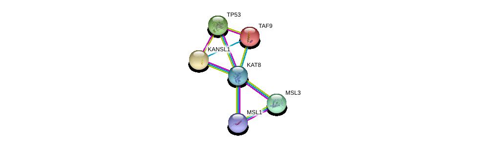 http://string-db.org/version_10/api/image/networkList?limit=0&targetmode=proteins&caller_identity=gene_cards&network_flavor=evidence&identifiers=9606.ENSP00000406037%0d%0a9606.ENSP00000462945%0d%0a9606.ENSP00000269305%0d%0a9606.ENSP00000312244%0d%0a9606.ENSP00000262419%0d%0a9606.ENSP00000217893%0d%0a