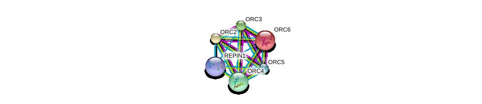 http://string-db.org/version_10/api/image/networkList?limit=0&targetmode=proteins&caller_identity=gene_cards&network_flavor=evidence&identifiers=9606.ENSP00000417291%0d%0a9606.ENSP00000219097%0d%0a9606.ENSP00000234296%0d%0a9606.ENSP00000257789%0d%0a9606.ENSP00000264169%0d%0a9606.ENSP00000297431%0d%0a