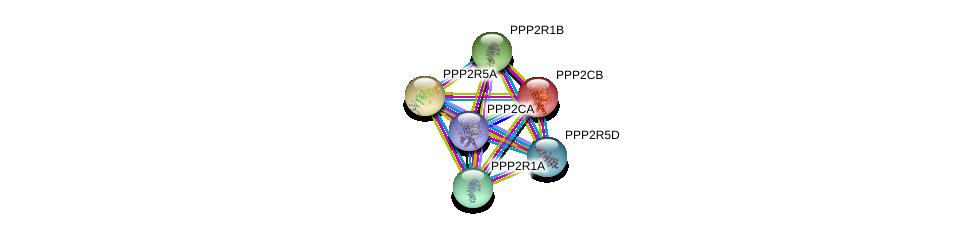 http://string-db.org/version_10/api/image/networkList?limit=0&targetmode=proteins&caller_identity=gene_cards&network_flavor=evidence&identifiers=9606.ENSP00000417963%0d%0a9606.ENSP00000311344%0d%0a9606.ENSP00000324804%0d%0a9606.ENSP00000221138%0d%0a9606.ENSP00000418447%0d%0a9606.ENSP00000261461%0d%0a