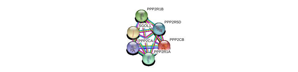 http://string-db.org/version_10/api/image/networkList?limit=0&targetmode=proteins&caller_identity=gene_cards&network_flavor=evidence&identifiers=9606.ENSP00000417963%0d%0a9606.ENSP00000324804%0d%0a9606.ENSP00000221138%0d%0a9606.ENSP00000418447%0d%0a9606.ENSP00000311344%0d%0a9606.ENSP00000263753%0d%0a