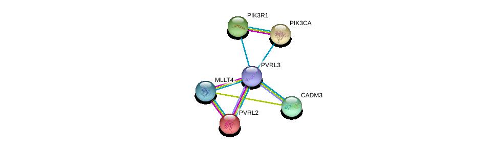 http://string-db.org/version_10/api/image/networkList?limit=0&targetmode=proteins&caller_identity=gene_cards&network_flavor=evidence&identifiers=9606.ENSP00000418070%0d%0a9606.ENSP00000252483%0d%0a9606.ENSP00000375956%0d%0a9606.ENSP00000274335%0d%0a9606.ENSP00000357106%0d%0a9606.ENSP00000263967%0d%0a