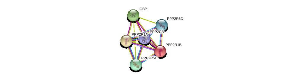 http://string-db.org/version_10/api/image/networkList?limit=0&targetmode=proteins&caller_identity=gene_cards&network_flavor=evidence&identifiers=9606.ENSP00000418447%0d%0a9606.ENSP00000348784%0d%0a9606.ENSP00000311344%0d%0a9606.ENSP00000324804%0d%0a9606.ENSP00000412324%0d%0a9606.ENSP00000417963%0d%0a