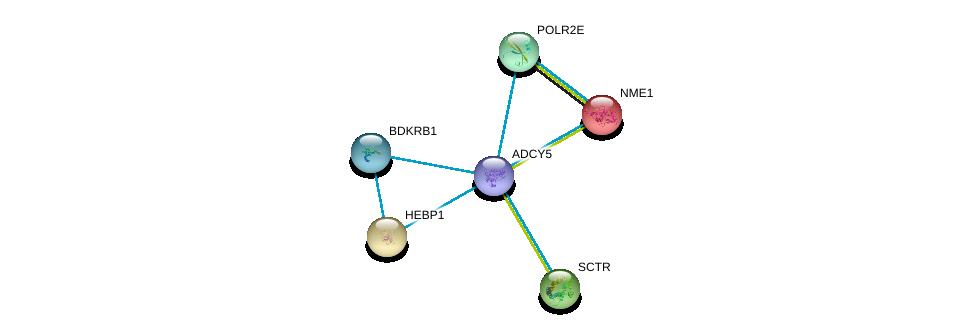 http://string-db.org/version_10/api/image/networkList?limit=0&targetmode=proteins&caller_identity=gene_cards&network_flavor=evidence&identifiers=9606.ENSP00000419361%0d%0a9606.ENSP00000013034%0d%0a9606.ENSP00000014930%0d%0a9606.ENSP00000019103%0d%0a9606.ENSP00000215587%0d%0a9606.ENSP00000216629%0d%0a