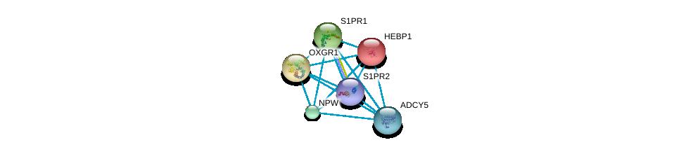 http://string-db.org/version_10/api/image/networkList?limit=0&targetmode=proteins&caller_identity=gene_cards&network_flavor=evidence&identifiers=9606.ENSP00000419361%0d%0a9606.ENSP00000014930%0d%0a9606.ENSP00000330070%0d%0a9606.ENSP00000305416%0d%0a9606.ENSP00000466933%0d%0a9606.ENSP00000298440%0d%0a