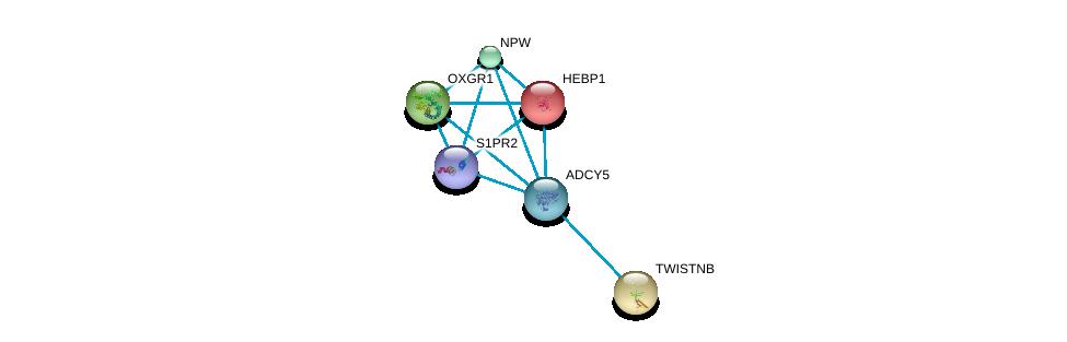 http://string-db.org/version_10/api/image/networkList?limit=0&targetmode=proteins&caller_identity=gene_cards&network_flavor=evidence&identifiers=9606.ENSP00000419361%0d%0a9606.ENSP00000014930%0d%0a9606.ENSP00000466933%0d%0a9606.ENSP00000298440%0d%0a9606.ENSP00000222567%0d%0a9606.ENSP00000330070%0d%0a