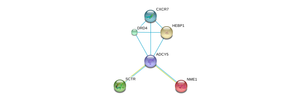 http://string-db.org/version_10/api/image/networkList?limit=0&targetmode=proteins&caller_identity=gene_cards&network_flavor=evidence&identifiers=9606.ENSP00000419361%0d%0a9606.ENSP00000272928%0d%0a9606.ENSP00000013034%0d%0a9606.ENSP00000014930%0d%0a9606.ENSP00000019103%0d%0a9606.ENSP00000176183%0d%0a