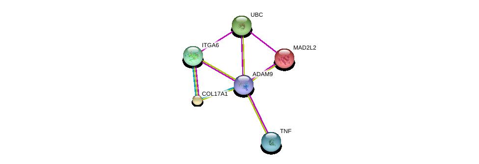 http://string-db.org/version_10/api/image/networkList?limit=0&targetmode=proteins&caller_identity=gene_cards&network_flavor=evidence&identifiers=9606.ENSP00000419446%0d%0a9606.ENSP00000340937%0d%0a9606.ENSP00000344818%0d%0a9606.ENSP00000235310%0d%0a9606.ENSP00000398698%0d%0a9606.ENSP00000386896%0d%0a