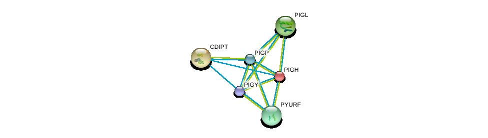http://string-db.org/version_10/api/image/networkList?limit=0&targetmode=proteins&caller_identity=gene_cards&network_flavor=evidence&identifiers=9606.ENSP00000420037%0d%0a9606.ENSP00000216452%0d%0a9606.ENSP00000225609%0d%0a9606.ENSP00000432688%0d%0a9606.ENSP00000219789%0d%0a9606.ENSP00000273968%0d%0a