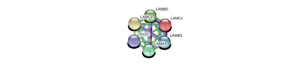 http://string-db.org/version_10/api/image/networkList?limit=0&targetmode=proteins&caller_identity=gene_cards&network_flavor=evidence&identifiers=9606.ENSP00000423541%0d%0a9606.ENSP00000258341%0d%0a9606.ENSP00000264144%0d%0a9606.ENSP00000307156%0d%0a9606.ENSP00000324532%0d%0a9606.ENSP00000348384%0d%0a
