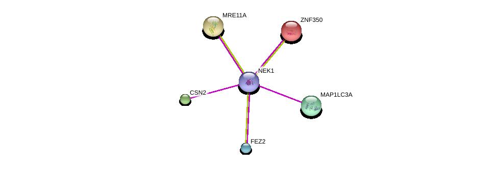 http://string-db.org/version_10/api/image/networkList?limit=0&targetmode=proteins&caller_identity=gene_cards&network_flavor=evidence&identifiers=9606.ENSP00000424757%0d%0a9606.ENSP00000363970%0d%0a9606.ENSP00000243644%0d%0a9606.ENSP00000341030%0d%0a9606.ENSP00000368547%0d%0a9606.ENSP00000325863%0d%0a