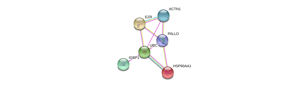 http://string-db.org/version_10/api/image/networkList?limit=0&targetmode=proteins&caller_identity=gene_cards&network_flavor=evidence&identifiers=9606.ENSP00000425556%0d%0a9606.ENSP00000338934%0d%0a9606.ENSP00000377941%0d%0a9606.ENSP00000344818%0d%0a9606.ENSP00000348784%0d%0a9606.ENSP00000335153%0d%0a