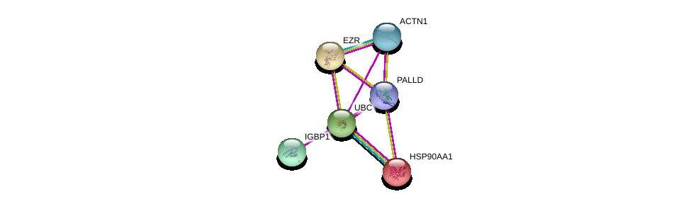 http://string-db.org/version_10/api/image/networkList?limit=0&targetmode=proteins&caller_identity=gene_cards&network_flavor=evidence&identifiers=9606.ENSP00000425556%0d%0a9606.ENSP00000377941%0d%0a9606.ENSP00000338934%0d%0a9606.ENSP00000344818%0d%0a9606.ENSP00000348784%0d%0a9606.ENSP00000335153%0d%0a