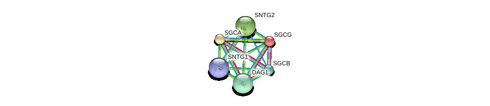 http://string-db.org/version_10/api/image/networkList?limit=0&targetmode=proteins&caller_identity=gene_cards&network_flavor=evidence&identifiers=9606.ENSP00000429276%0d%0a9606.ENSP00000312435%0d%0a9606.ENSP00000370839%0d%0a9606.ENSP00000262018%0d%0a9606.ENSP00000218867%0d%0a9606.ENSP00000311837%0d%0a