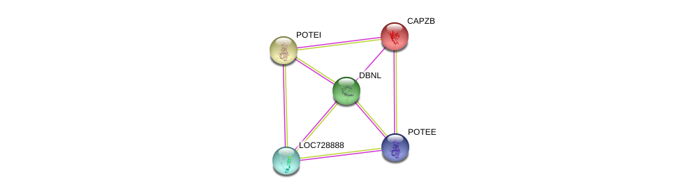 http://string-db.org/version_10/api/image/networkList?limit=0&targetmode=proteins&caller_identity=gene_cards&network_flavor=evidence&identifiers=9606.ENSP00000430853%0d%0a9606.ENSP00000264202%0d%0a9606.ENSP00000417653%0d%0a9606.ENSP00000417653%0d%0a9606.ENSP00000439189%0d%0a9606.ENSP00000392718%0d%0a