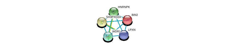 http://string-db.org/version_10/api/image/networkList?limit=0&targetmode=proteins&caller_identity=gene_cards&network_flavor=evidence&identifiers=9606.ENSP00000431284%0d%0a9606.ENSP00000365439%0d%0a9606.ENSP00000365439%0d%0a9606.ENSP00000427687%0d%0a9606.ENSP00000267012%0d%0a9606.ENSP00000348215%0d%0a
