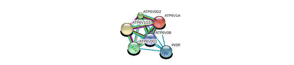 http://string-db.org/version_10/api/image/networkList?limit=0&targetmode=proteins&caller_identity=gene_cards&network_flavor=evidence&identifiers=9606.ENSP00000431605%0d%0a9606.ENSP00000273398%0d%0a9606.ENSP00000281087%0d%0a9606.ENSP00000285393%0d%0a9606.ENSP00000290949%0d%0a9606.ENSP00000303830%0d%0a