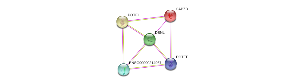 http://string-db.org/version_10/api/image/networkList?limit=0&targetmode=proteins&caller_identity=gene_cards&network_flavor=evidence&identifiers=9606.ENSP00000431814%0d%0a9606.ENSP00000264202%0d%0a9606.ENSP00000417653%0d%0a9606.ENSP00000417653%0d%0a9606.ENSP00000439189%0d%0a9606.ENSP00000392718%0d%0a