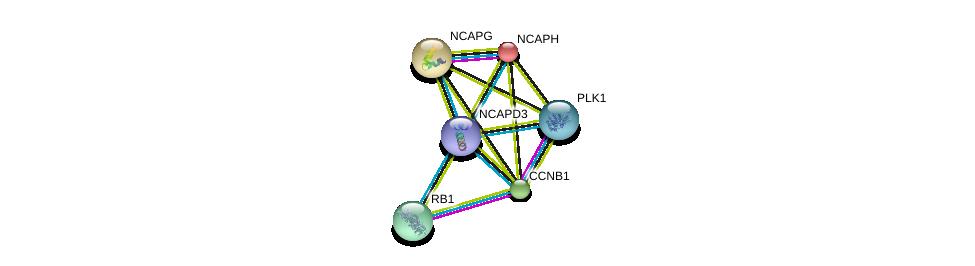 http://string-db.org/version_10/api/image/networkList?limit=0&targetmode=proteins&caller_identity=gene_cards&network_flavor=evidence&identifiers=9606.ENSP00000433681%0d%0a9606.ENSP00000240423%0d%0a9606.ENSP00000251496%0d%0a9606.ENSP00000256442%0d%0a9606.ENSP00000267163%0d%0a9606.ENSP00000300093%0d%0a