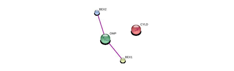 http://string-db.org/version_10/api/image/networkList?limit=0&targetmode=proteins&caller_identity=gene_cards&network_flavor=evidence&identifiers=9606.ENSP00000436376%0d%0a9606.ENSP00000361813%0d%0a9606.ENSP00000442521%0d%0a9606.ENSP00000308928%0d%0a