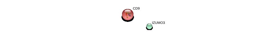 http://string-db.org/version_10/api/image/networkList?limit=0&targetmode=proteins&caller_identity=gene_cards&network_flavor=evidence&identifiers=9606.ENSP00000438895%0d%0a9606.ENSP00000009180%0d%0a