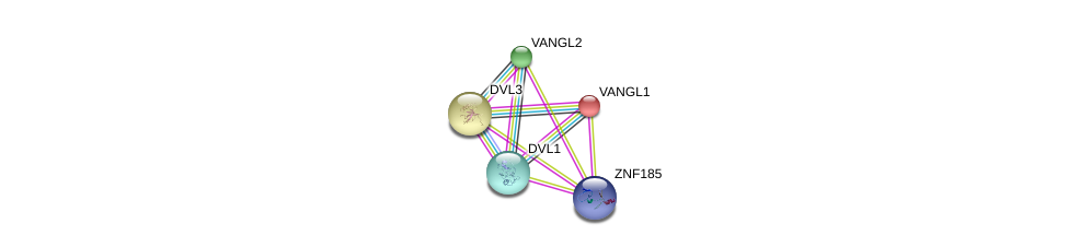 http://string-db.org/version_10/api/image/networkList?limit=0&targetmode=proteins&caller_identity=gene_cards&network_flavor=evidence&identifiers=9606.ENSP00000440847%0d%0a9606.ENSP00000357040%0d%0a9606.ENSP00000310800%0d%0a9606.ENSP00000316054%0d%0a9606.ENSP00000368169%0d%0a9606.ENSP00000368169%0d%0a