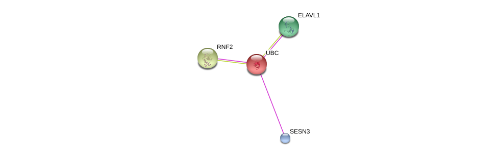 http://string-db.org/version_10/api/image/networkList?limit=0&targetmode=proteins&caller_identity=gene_cards&network_flavor=evidence&identifiers=9606.ENSP00000441927%0d%0a9606.ENSP00000344818%0d%0a9606.ENSP00000385269%0d%0a9606.ENSP00000356480%0d%0a
