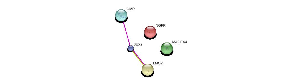 http://string-db.org/version_10/api/image/networkList?limit=0&targetmode=proteins&caller_identity=gene_cards&network_flavor=evidence&identifiers=9606.ENSP00000442521%0d%0a9606.ENSP00000436376%0d%0a9606.ENSP00000257818%0d%0a9606.ENSP00000172229%0d%0a9606.ENSP00000276344%0d%0a