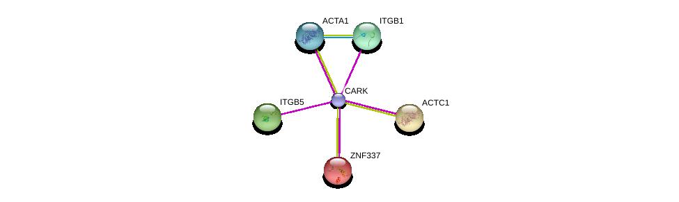 http://string-db.org/version_10/api/image/networkList?limit=0&targetmode=proteins&caller_identity=gene_cards&network_flavor=evidence&identifiers=9606.ENSP00000450895%0d%0a9606.ENSP00000252979%0d%0a9606.ENSP00000296181%0d%0a9606.ENSP00000355645%0d%0a9606.ENSP00000290378%0d%0a9606.ENSP00000303351%0d%0a