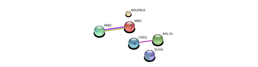 http://string-db.org/version_10/api/image/networkList?limit=0&targetmode=proteins&caller_identity=gene_cards&network_flavor=evidence&identifiers=9606.ENSP00000452398%0d%0a9606.ENSP00000261537%0d%0a9606.ENSP00000426103%0d%0a9606.ENSP00000440586%0d%0a9606.ENSP00000268668%0d%0a9606.ENSP00000361076%0d%0a