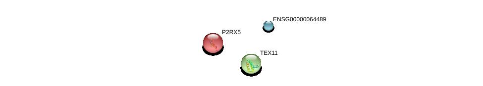 http://string-db.org/version_10/api/image/networkList?limit=0&targetmode=proteins&caller_identity=gene_cards&network_flavor=evidence&identifiers=9606.ENSP00000457957%0d%0a9606.ENSP00000340995%0d%0a9606.ENSP00000225328%0d%0a
