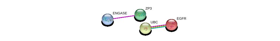http://string-db.org/version_10/api/image/networkList?limit=0&targetmode=proteins&caller_identity=gene_cards&network_flavor=evidence&identifiers=9606.ENSP00000462333%0d%0a9606.ENSP00000378326%0d%0a9606.ENSP00000275493%0d%0a9606.ENSP00000344818%0d%0a