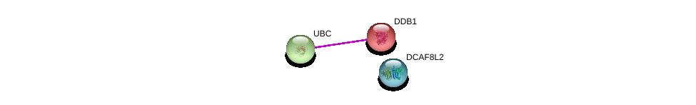 http://string-db.org/version_10/api/image/networkList?limit=0&targetmode=proteins&caller_identity=gene_cards&network_flavor=evidence&identifiers=9606.ENSP00000462745%0d%0a9606.ENSP00000344818%0d%0a9606.ENSP00000301764%0d%0a