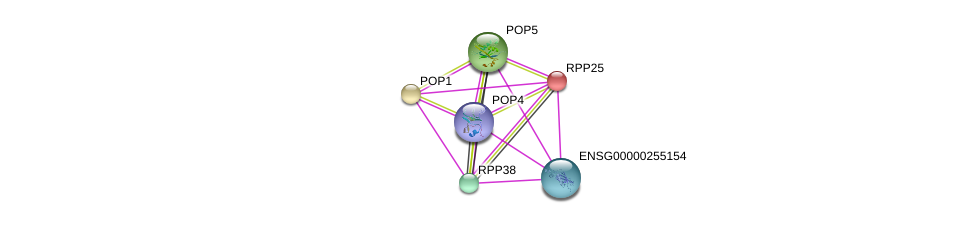 http://string-db.org/version_10/api/image/networkList?limit=0&targetmode=proteins&caller_identity=gene_cards&network_flavor=evidence&identifiers=9606.ENSP00000465213%0d%0a9606.ENSP00000317691%0d%0a9606.ENSP00000437142%0d%0a9606.ENSP00000367439%0d%0a9606.ENSP00000339529%0d%0a9606.ENSP00000350098%0d%0a