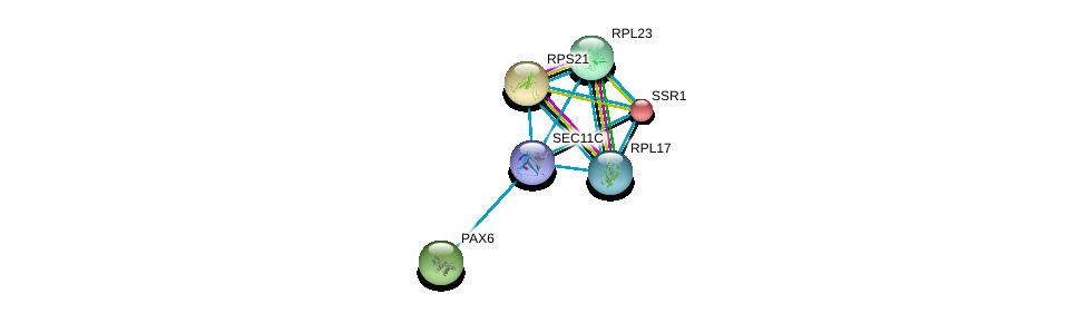 http://string-db.org/version_10/api/image/networkList?limit=0&targetmode=proteins&caller_identity=gene_cards&network_flavor=evidence&identifiers=9606.ENSP00000468633%0d%0a9606.ENSP00000462023%0d%0a9606.ENSP00000345957%0d%0a9606.ENSP00000368401%0d%0a9606.ENSP00000377865%0d%0a9606.ENSP00000244763%0d%0a