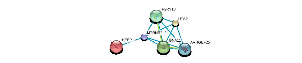 http://string-db.org/version_10/api/image/networkList?limit=0&targetmode=proteins&caller_identity=gene_cards&network_flavor=evidence&identifiers=9606.ENSP00000468991%0d%0a9606.ENSP00000335560%0d%0a9606.ENSP00000014930%0d%0a9606.ENSP00000054668%0d%0a9606.ENSP00000078429%0d%0a9606.ENSP00000171757%0d%0a