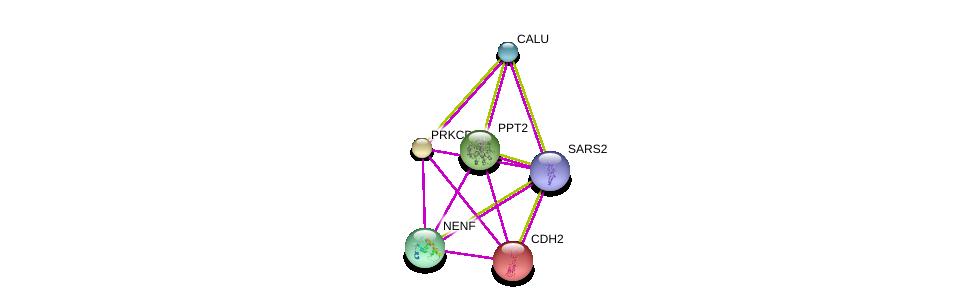 http://string-db.org/version_10/api/image/networkList?limit=0&targetmode=proteins&caller_identity=gene_cards&network_flavor=evidence&identifiers=9606.ENSP00000472847%0d%0a9606.ENSP00000354608%0d%0a9606.ENSP00000307292%0d%0a9606.ENSP00000355955%0d%0a9606.ENSP00000420381%0d%0a9606.ENSP00000269141%0d%0a